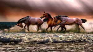 海を渡る馬