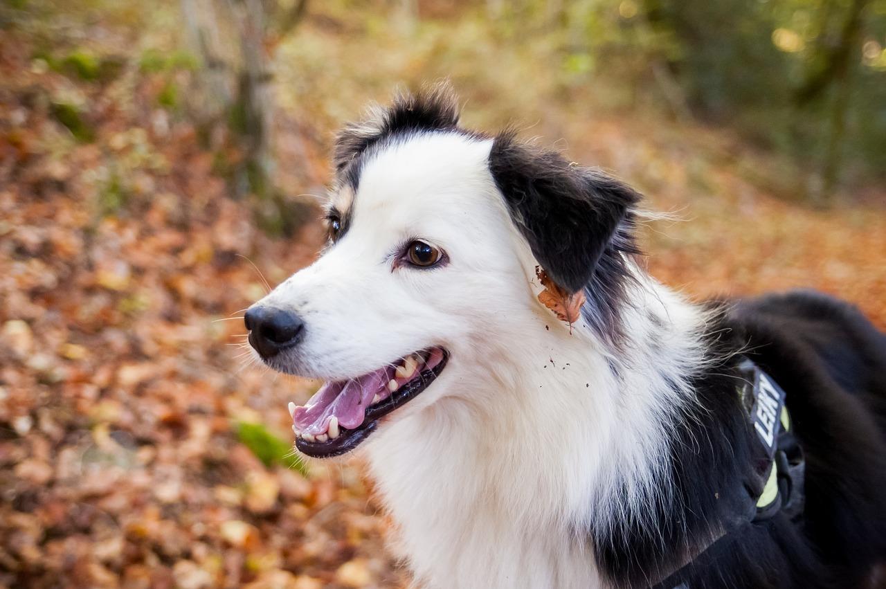 白と黒の犬